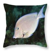 Blue Tang On Caribbean Reef Throw Pillow by Karen Doody