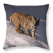 Bobcat Felis Rufus Prowls Over The Snow Throw Pillow by Dr. Maurice G. Hornocker