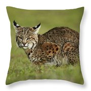 Bobcat Juvenile Santa Cruz California Throw Pillow by Sebastian Kennerknecht