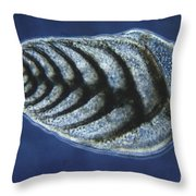 Bolivina Robusta Lm Throw Pillow by Eric V. Grave