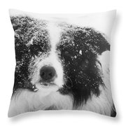 Border Collie Throw Pillow by Carole  Martinez