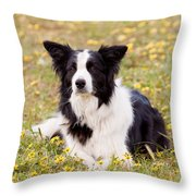 Border Collie in Field of Yellow Flowers Throw Pillow by Michelle Wrighton