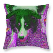 Border Collie Stare In Colors Throw Pillow by Smilin Eyes  Treasures