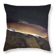 Bowfin Amia Calva Swims The Murky Throw Pillow by Michael Wood