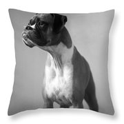 Boxer Dog Throw Pillow by Stephanie McDowell