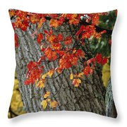 Bright Red Maple Leaves Against An Oak Throw Pillow by Tim Laman