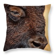 Buffalo Up Close Throw Pillow by Alan Hutchins