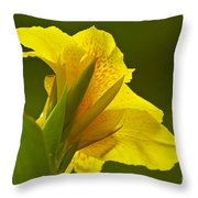Canna Lily Throw Pillow by Heiko Koehrer-Wagner