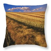 Canola Field, Tiger Hills, Manitoba Throw Pillow by Dave Reede