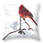 Cardinal In Snow Throw Pillow by Tamyra Ayles