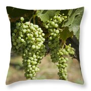 Casa Blanca Valley, Wine Growing Region Throw Pillow by Richard Nowitz