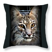 Cat Fever Throw Pillow by Kathy  White