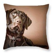 Chocolate Labrador Retriever Portrait Throw Pillow by David DuChemin