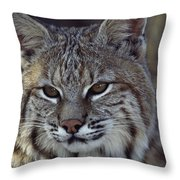 Close-up Of A Bobcat Throw Pillow by Dr. Maurice G. Hornocker