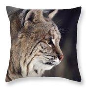 Close-up Of A Bobcat Felis Rufus Throw Pillow by Dr. Maurice G. Hornocker