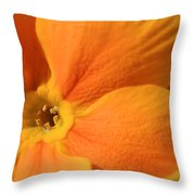 Close Up Of An Orange Primrose Flower Throw Pillow by Joe Petersburger