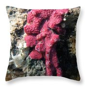 Close-up Of Live Sponge Throw Pillow by Ted Kinsman