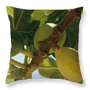 Close-up Of Two Large Figs Hanging Throw Pillow by Robert Sisson