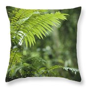 Close View Of Ferns In A Papua New Throw Pillow by Klaus Nigge