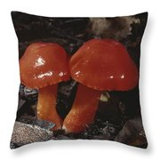 Close View Of Scarlet Waxy Cap Throw Pillow by Stephen Sharnoff