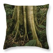 Close View Of Tree Roots In A Rain Throw Pillow by Michael Melford