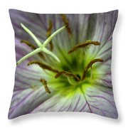 Closeup Of A Showy Evening Primrose Throw Pillow by Amy White & Al Petteway