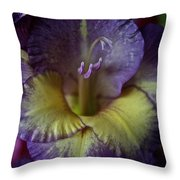 Complimentary Colors Throw Pillow by Susan Herber