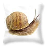 Curious Snail Throw Pillow by Elena Elisseeva