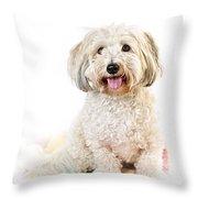 Cute Dog Portrait Throw Pillow by Elena Elisseeva