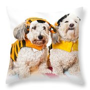 Cute dogs in Halloween costumes Throw Pillow by Elena Elisseeva