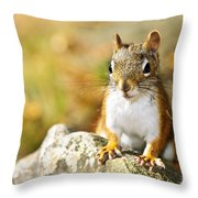 Cute Red Squirrel Closeup Throw Pillow by Elena Elisseeva