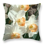 Daffodil Flowers Art Prints Spring Floral Throw Pillow by Baslee Troutman