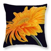 Daisy Of Joy Throw Pillow by Juergen Roth
