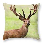 Deer With Antlers, Harrogate Throw Pillow by John Short