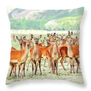 Deers Throw Pillow by MotHaiBaPhoto Prints