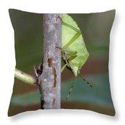 Descent Of A Green Stink Bug Throw Pillow by Doris Potter