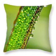Dewdrops On Lemongrass Throw Pillow by Thomas R Fletcher