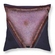 Diatom - Triceratium Formosum Throw Pillow by Eric V. Grave