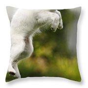 Dog Jumps Throw Pillow by Richard Wear