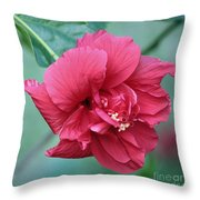 Double Hibiscus Throw Pillow by Carol Groenen