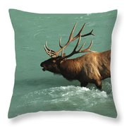 Elk In The Athabasca River Throw Pillow by Bob Christopher