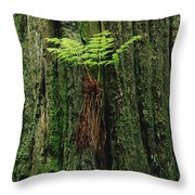 Epiphytic Fern Growing On Redwood Throw Pillow by Gerry Ellis