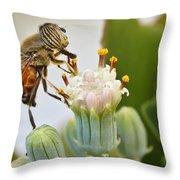Eristalinus taeniops Throw Pillow by Heidi Smith