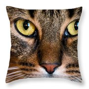 Face Framed Feline Throw Pillow by Art Dingo
