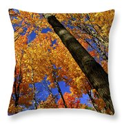 Fall maple trees Throw Pillow by Elena Elisseeva