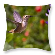 Female Allen's Hummingbird Throw Pillow by Mike Herdering