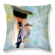 Female Eastern Bluebird At Nesting Box Throw Pillow by Jai Johnson