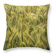 Field Of Green Throw Pillow by Mike McGlothlen