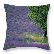 Field Of Lavender Throw Pillow by Bernard Jaubert