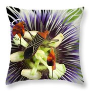 Flag-footed Bug Anisocelis Flavolineata Throw Pillow by Christian Ziegler